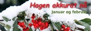 Johns hagekalender: Hagen i januar og februar