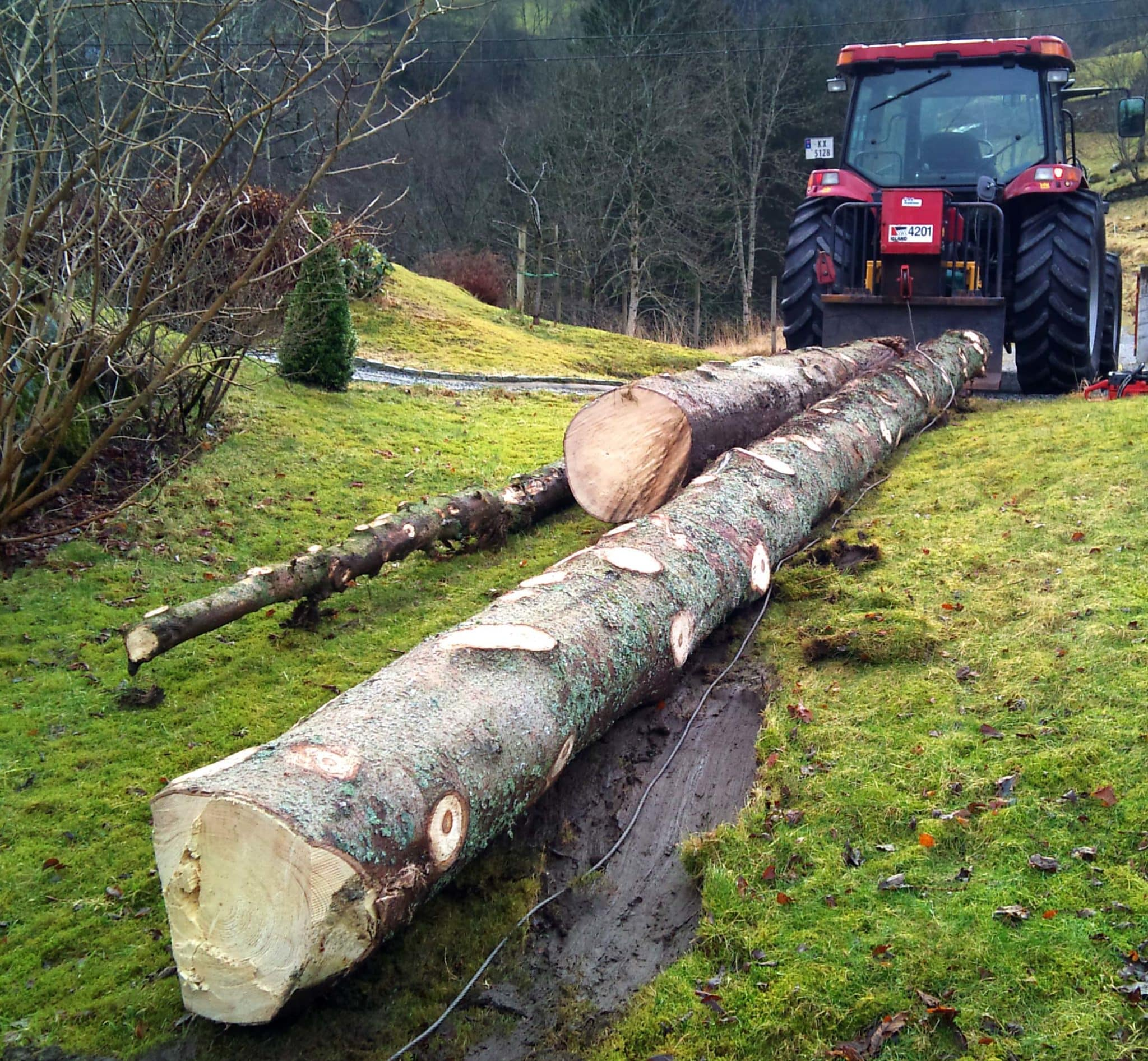 Helland hogst AS stilte med stor traktor og vinsj. De gjorde vei i vellingen...