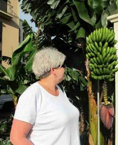 Even straight to the Porto Mare`s wall grows bananas. Madeira's exuberance is overwhelming. (Photo: johnsteffensen.no)
