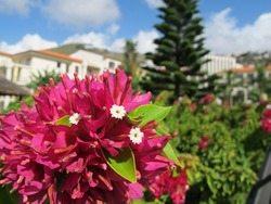 Madeira er blomster - i alle mulige fasonger. Her fra hotellhagen til Porto Mare. (Foto: johnsteffensen.no)