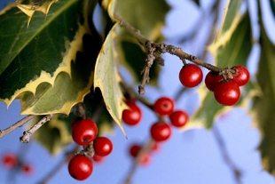 Blitz Quiz 5 om jul og julehøytiden
