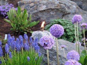 Minnehagen – Den blå hagen