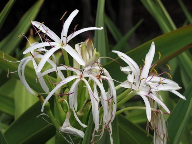 All verdens planter stortrives på Madeira. Subtropisk klima kombinert med gunstig jordsmonn er oppskriften. Madeira er enhver hagentusiasts drømmested. www.johnsteffensen.no