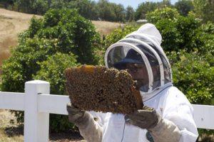 Må jeg, så må jeg. Tror jeg... Bier er uerstattelige i vårt økosystem. Nå er det fare på ferde...