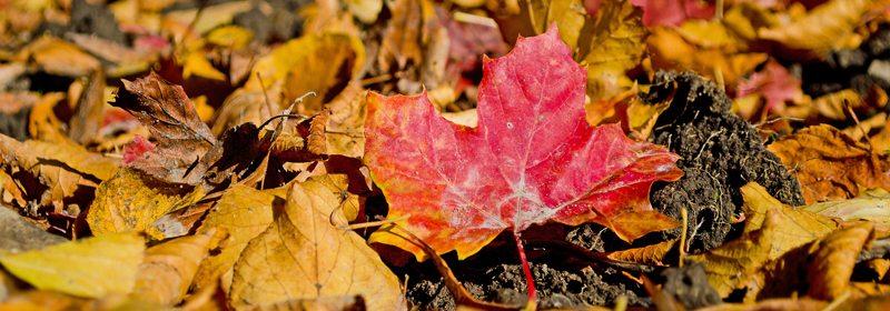 Plantetildekking er meget lønnsomt. Med enkle grep kan en sørge for at neste års blomsterprakt blir minst like vakker som årets... www.johnsteffensen.no
