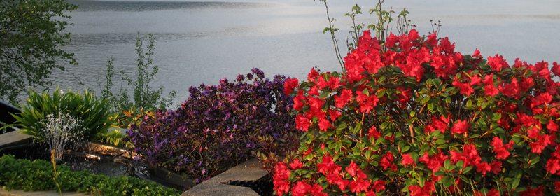 Blomster og blader tar seg alltid best ut når du ser på dem fra sør og/eller vest. Dette bør du ta i betraktning når du velger hvor blomsterbedet skal plasseres i forhold til sitteplassen. Foto: johnsteffensen.no