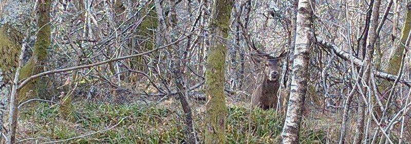 Dersom en bruker øynene godt, kan det være at det står en hjort og betrakter deg litt på avstand. Som her, like i nærheten av tettbebyggelsen i Bergen. Foto: John Magnus Steffensen