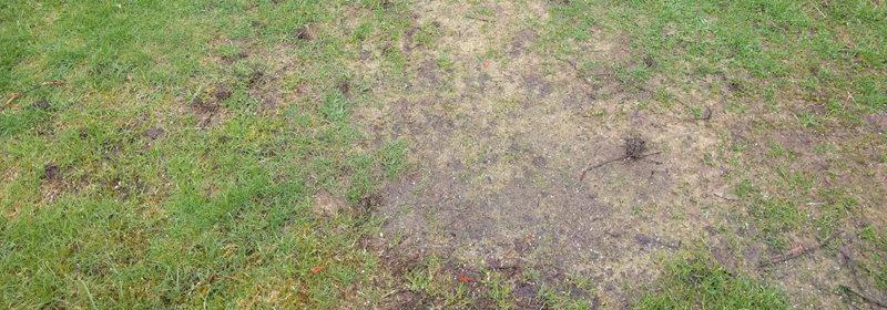 Område av plenen som har fått tøff medfart i løpet av vinteren og ikke minst tidlig vår.... Foto - johnsteffensen.no