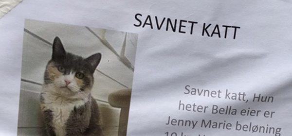 Jenny Marie savner katten sin. Hun er villig til å betale finnerlønn også. Foto - John Steffensen