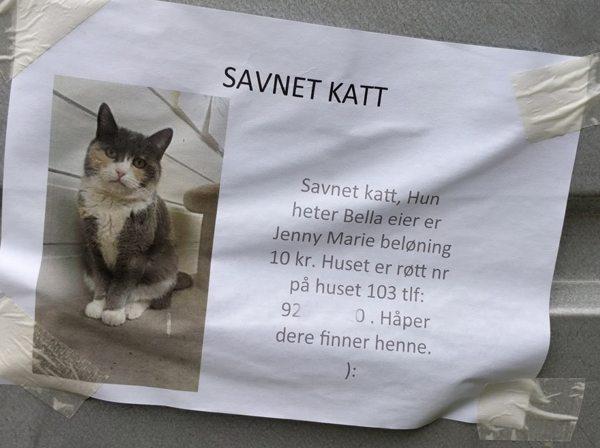 Savnet katt, belønning 10 kr. Foto johnsteffensen.no