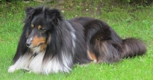 Hund på hotell: «Kompis» var både velkommen og uønsket