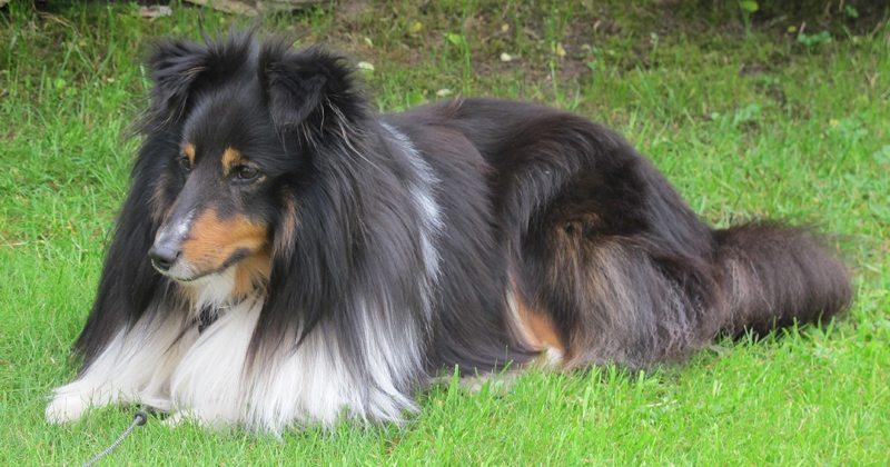 hund-pa-hotell-kompis-var-bade-velkommen-og-uonsket-www-johnsteffensen-no