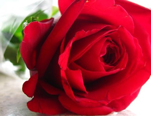 Rosers språk: Si det med roser