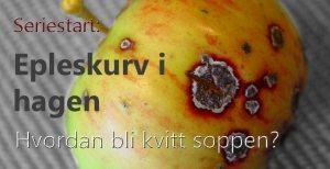 Epleskurv (1) – Epler til besvær