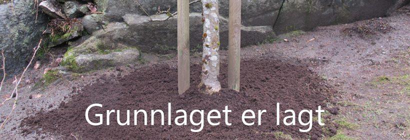 Epleskurv skal bekjempes ved at treet får gode vekstvilkår.