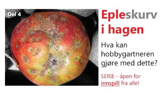 Skurv på epler. Hvordan få bukt med dette? www.johnsteffensen.no