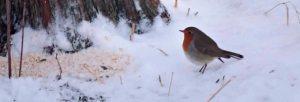 Småfuglene er nå i den vanskeligste tiden av året
