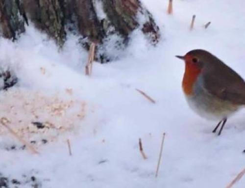 Småfuglene er nå i den vanskeligste tiden av året | småfugler