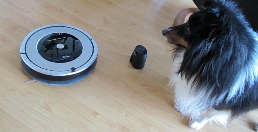 Hunden Kompis bryr seg ikke om robotstøvsugeren. De er gode venner. www.johnsteffensen.no