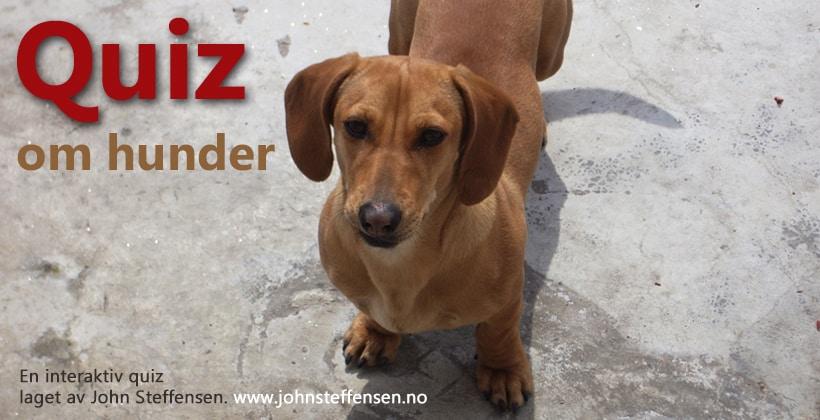 Quiz om hunder. www.johnsteffensen.no