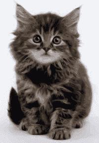 Quiz om katter. Test dine kunnskaper om katt her. www.johnsteffensen.no
