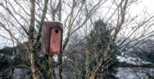 Fuglekassen fra Schwegler står for en støyt og skal vare i flere tiår…