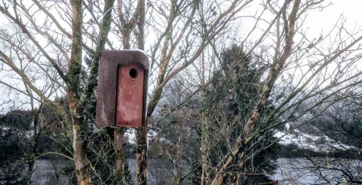Schwegler sin fuglekasse er ingen fryd for øyet. Men fuglene digger den. Foto: www.johnsteffensen.no