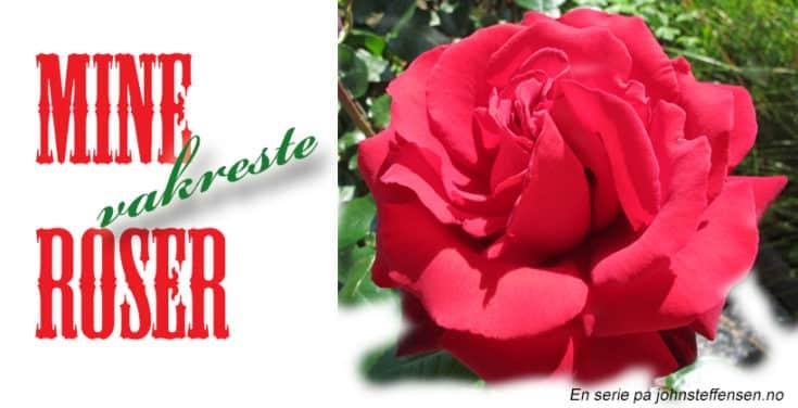 Mine vakreste roser er en serie på www.johnsteffensen.no - Her følger del 2.