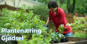 Gjødsel. Plantenæring og NPK